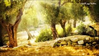 سورة الرحمن بتلاوة جميلة للقارئ أحمد العبيد