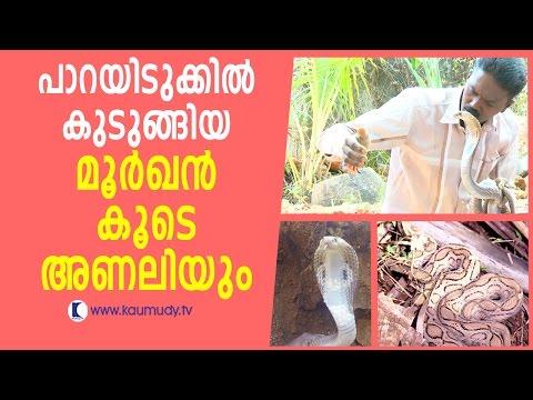 Wow ! Vava Suresh Caught Dangerous Cobra & Russell's Viper | Snake Master