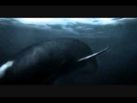 tiburon vs cachalote deep sea killers jurassic fight club mundo jurasico CHOP SUEY
