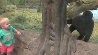 Toddler & Baby Gorilla Play Peekaboo