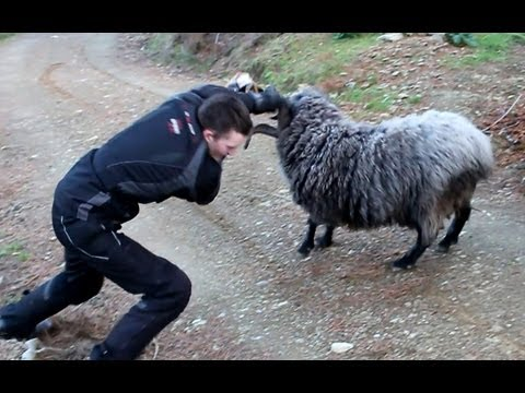 Xxx Mp4 Angry Ram Finds 2 More Victims 3gp Sex