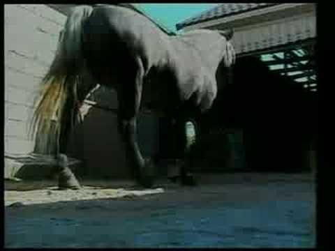 Cele mai frumoase exemplare de cai