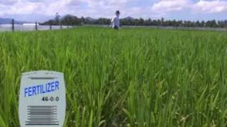 1. Important Nutrients: Tales of Ryza -- The ABCs of proper nutrition for rice plants