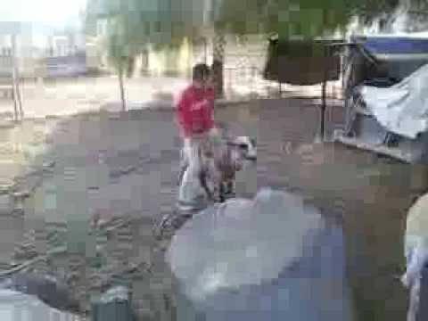 How To Ride A Sheep