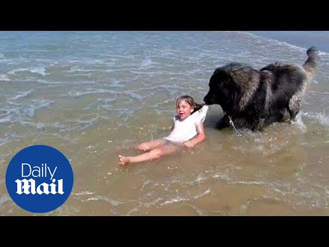Xxx Mp4 Adorable Moment Dog 39 Rescues 39 Girl Who Is Playing In The Sea 3gp Sex