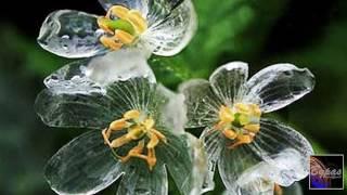 জীবন্ত কাঁচের ফুল 'Skeleton Flower'