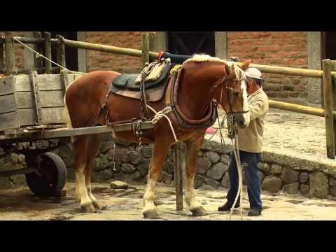 Xxx Mp4 How To Breed Draft Horses Percheron Blegium Horse TvAgro By Juan Gonzalo Angel 3gp Sex