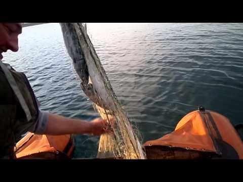 თევზაობა ჩაქვში•tevzaoba chaqvshi