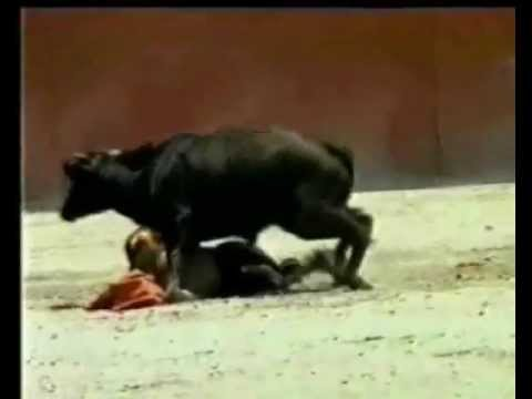 Bull tries to fuck woman matador