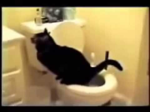 Xxx Mp4 Funny Videos Cats 2014 3gp Sex
