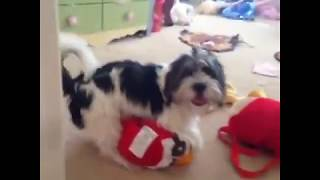 Funny Dog Vine Compilation - Dogs will hump anything