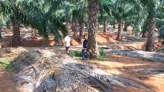 Enjoy ing frnds in forest