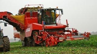 Knolselderij rooien / Sellerie ernten / harvesting celeriac with Grimme Tectron - Vrolijk Landbouw