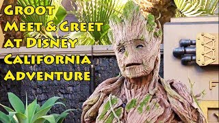 Full Size Groot Character Meet & Greet at Disneyland Summer of Heroes, Guardians of the Galaxy