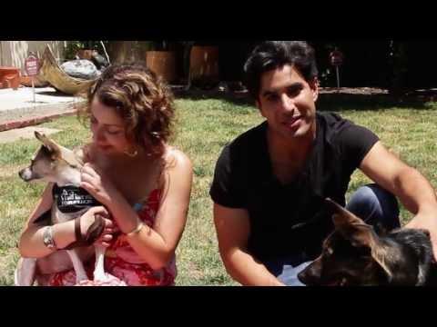 Animal Adoption PSA