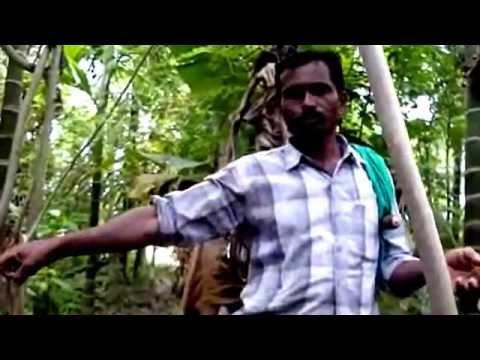 ZERO BUDGET NATURAL FARMING - INDIA'S BEST PALEKAR'S FIVE LAYERS MODEL.