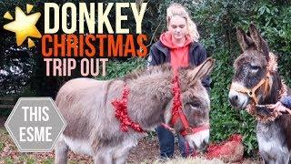 Donkey Christmas trip out | Vlogmas | This Esme
