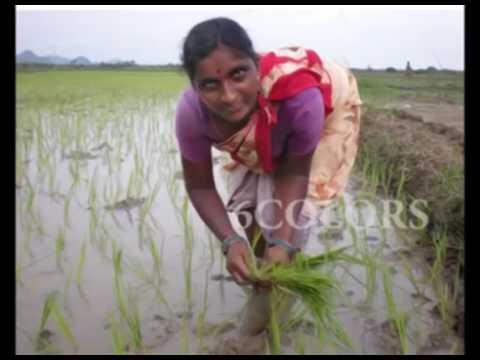 latest Telugu village recording dance
