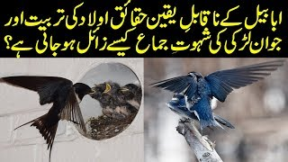 Hidden Facts About Ababeel Bird in Urdu/Hindi || Amazing Facts About Swallows in Hindi