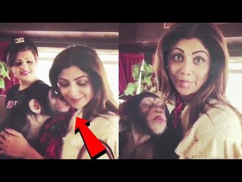 Xxx Mp4 Shilpa Shetty Gets A Kiss From Chimpanzee WATCH VIDEO 3gp Sex
