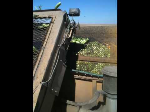OxBo picker corn picker