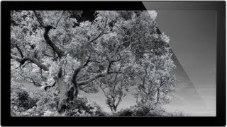How To Convert Images To Infrared - Infrared Photography