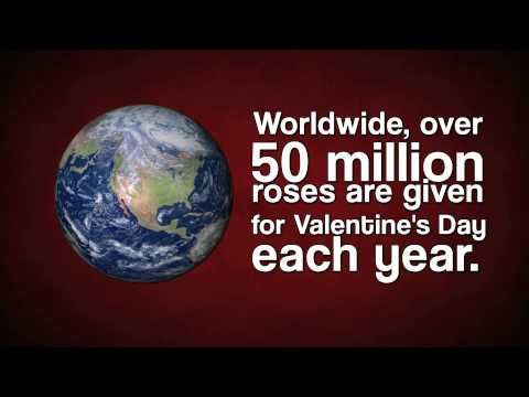 Interesting Facts about Valentine's Day--I bet