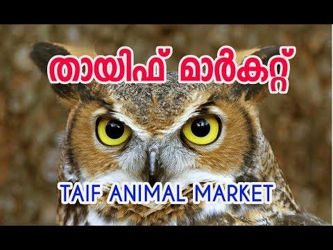 Taif wildlife animal market (Souq)saudi arabia #eco own#Malayalam سوق الحيوانات മൂങ്ങ, കോഴി, താറാവ്