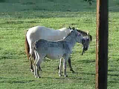 Horse beaten with a big stick