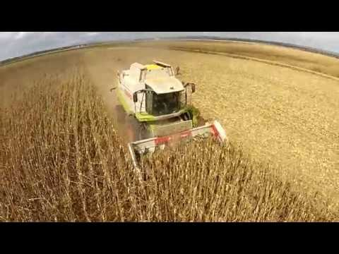 Cosecha de maíz 2016 COSECHADORAS MERINO