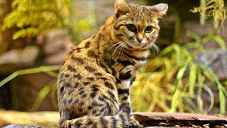 14 Wildcats You Didn't Know Exist