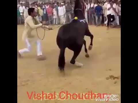 Xxx Mp4 Horse Dance Naw 2017 3gp Sex