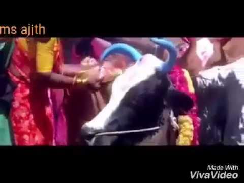 Xxx Mp4 Mattu Pongal Whatsapp Video Status Viral Videos 3gp Sex