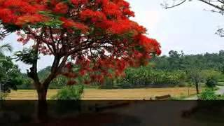 Dino Vob anondo Bangladeshi  Sylhet Moulavibazar Region Folk Song  Koio Bondu Bondher Nagal  Paile
