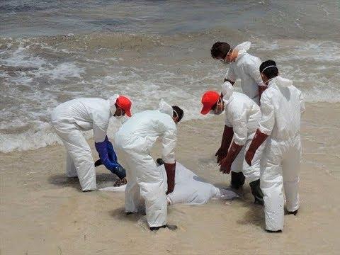 ¿Encuentran más de 50 cuerpos tirados en las costas de Cancún? (Explicación)
