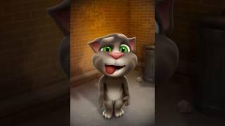Cat catUn