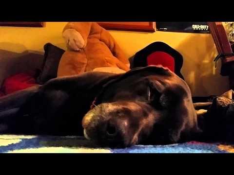 Xxx Mp4 Six Minute Video Of My Dog Sleeping 3gp Sex