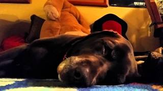 Six Minute Video of My Dog Sleeping
