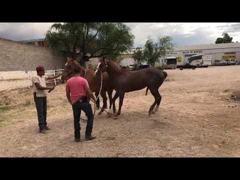 Xxx Mp4 Natural Horses Breeding Horse Sex 3gp Sex