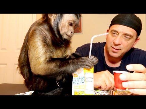 Xxx Mp4 Capuchin Monkey Juice Box 3gp Sex