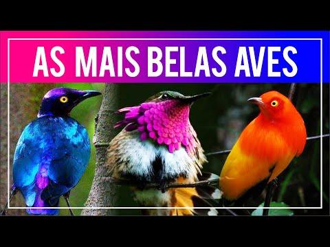 As aves MAIS BONITAS do mundo