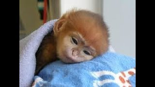 THE CUTEST MONKEYS YOU HAVE EVER SEEN || Cute Baby Monkeys Video