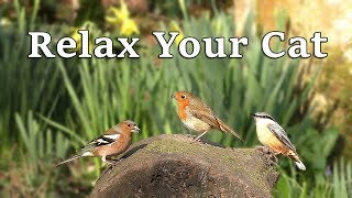 Relax Cats : Relax Your Cat at Home Watching Beautiful Birds