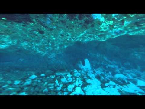 Spearfishing Big Island Hawaii Mu Moana Kali Tako Uku