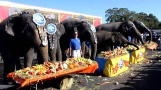 2011 Ringling Bros and Barnum & Bailey Elephants Thanksgiving # 2