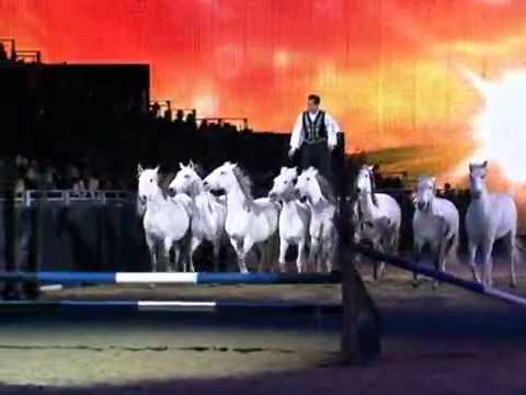 Animais são conduzidos sem rédeas em show de equitação na Alemanha Equitana