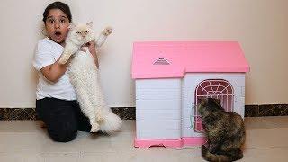 شرينا قط جديد شوفوا ردة فعل قطتنا !! عصبت !! Our cat Meet Our New cat angry cat