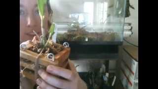 free tank+orchid= terrarium for Anna!!