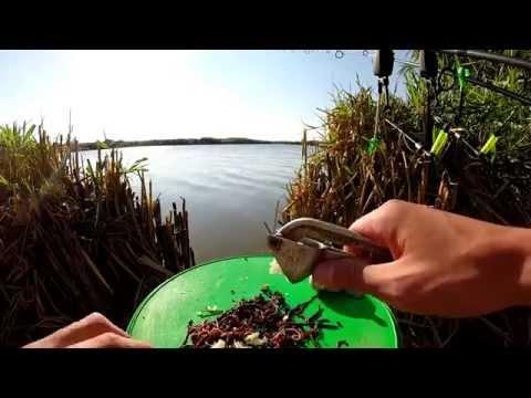 поиск червей для рыбалки