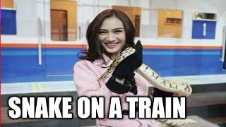 Snake On A Train 2018
